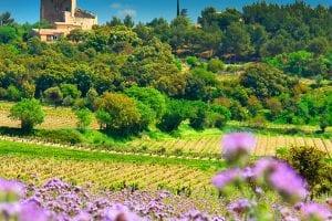 Rhônedalens viner inför provning
