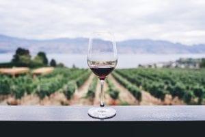 Pinot noir! Älskad världen över