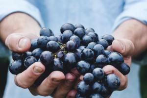 Vad är naturvin?