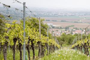 Vad är biodynamiskt vin?